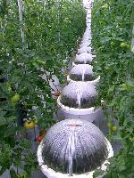 トマト工場.png